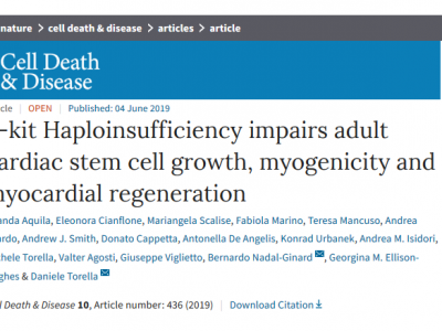 New MaCCardio LAB article in Cell Death & Disease